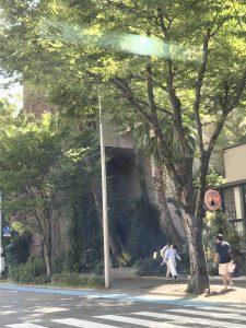 ラスコーの壁画を福岡で見る~ラスコー展